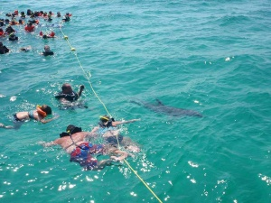 image of passengers snorkeling during an Island Time Sailing cruise